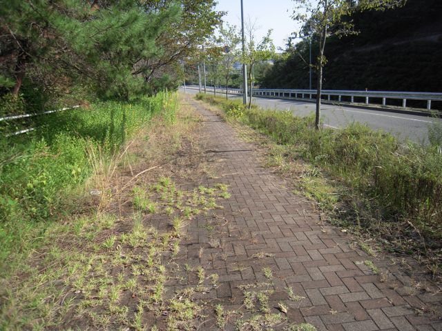 [Unmaintained sidewalk grown all grassy]