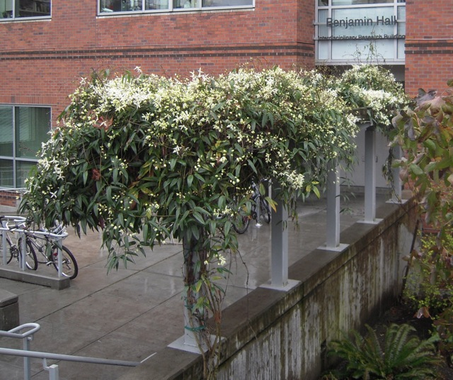 [Whoever designed the building and trellis knew what they were doing]
