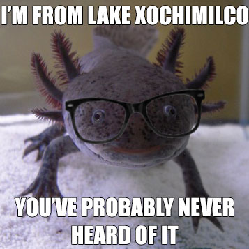 Hex with hipster glasses shopped on, with text: I'm from Lake Xochimilco; you've probably never heard of it
