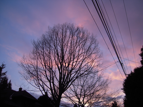[beautiful spring evening sky with silhouetted tree]